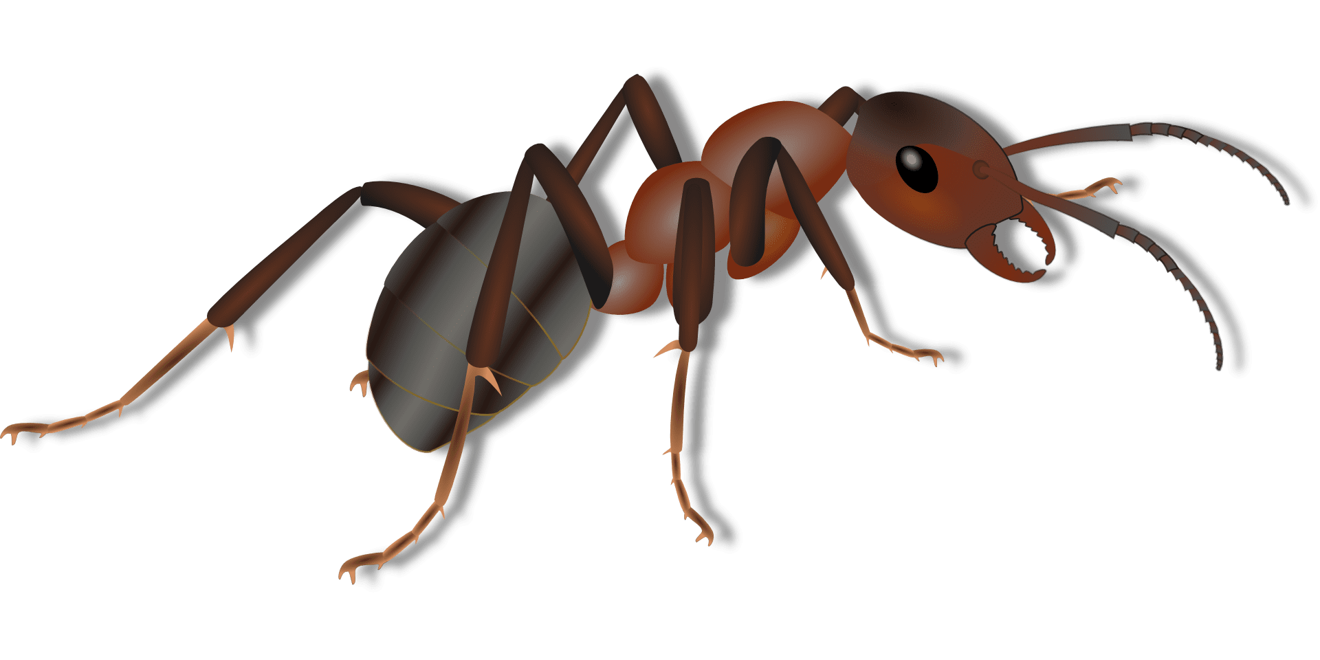 how-to-get-rid-of-ants-in-the-kitchen