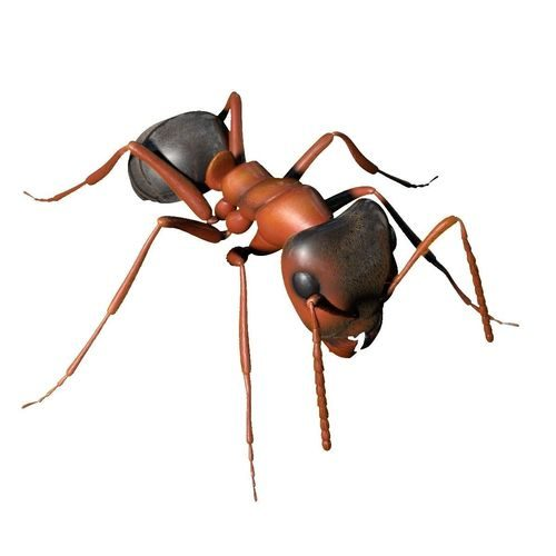 ant-rigged-3d-model-rigged-ma-mb