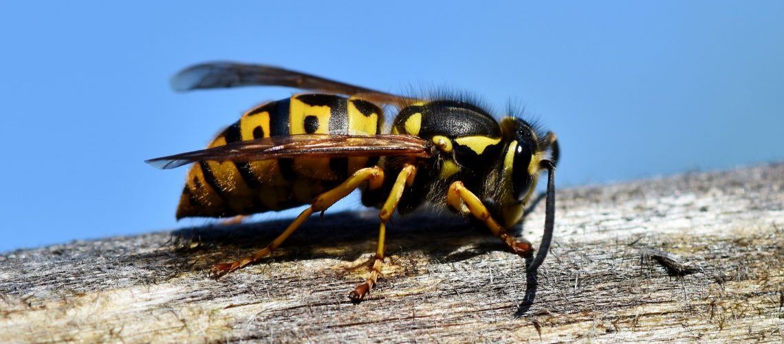 Here's What to Do After a Wasp Sting